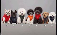 Moncler - Poldo Dog Couture